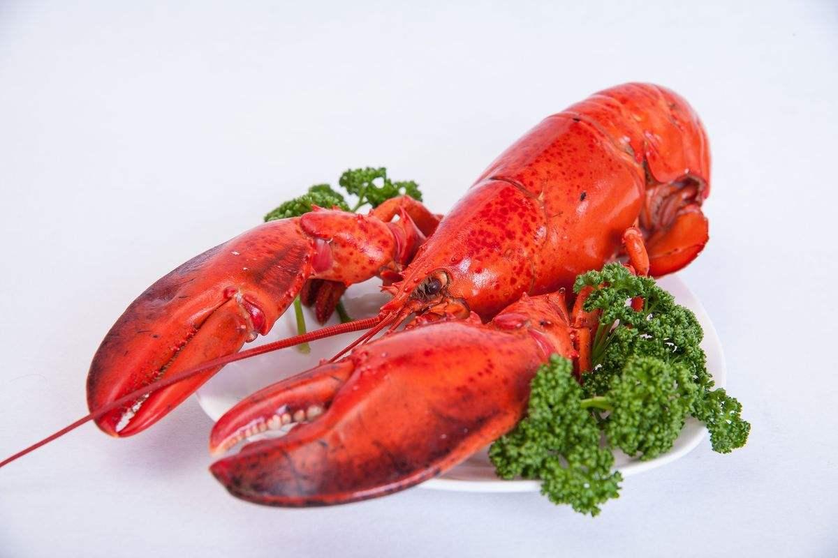 波士顿龙虾(特价) _活海鲜_虾兵蟹将_美食频道_洋洋海